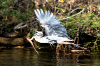 Heron Catch